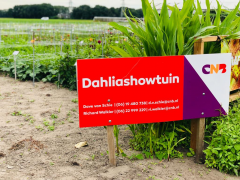 Highlighted image: CNB Dahliashowtuin geopend