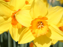 Highlighted image: Narcis