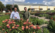 News image: Video: De dahliashowtuin